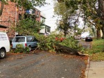 0001 Tree Damage